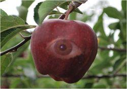 Apple of a bioengineer's eye